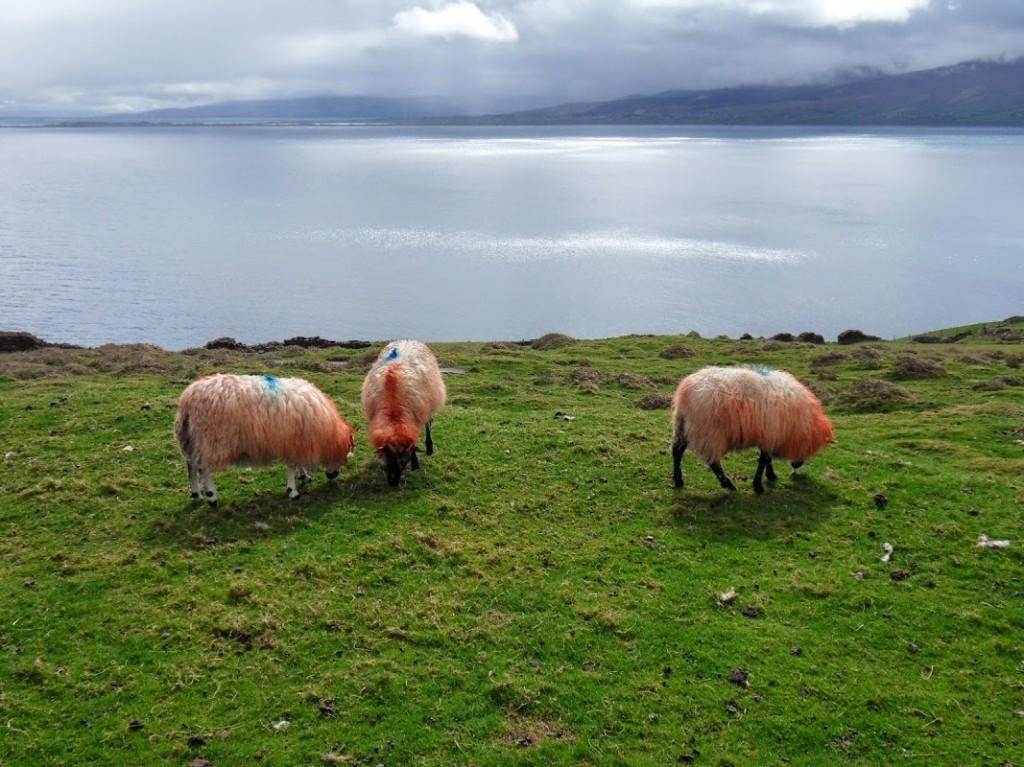 Irland 419